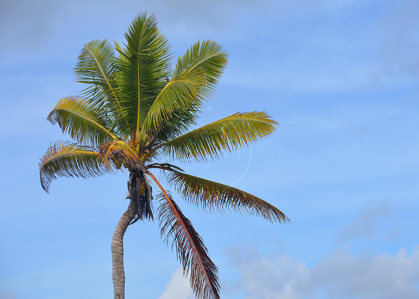 Palm Tree Left
