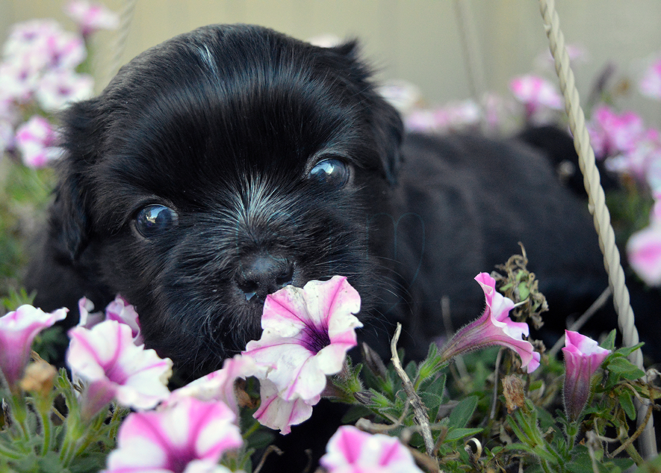 Puppy hiding in the flowers