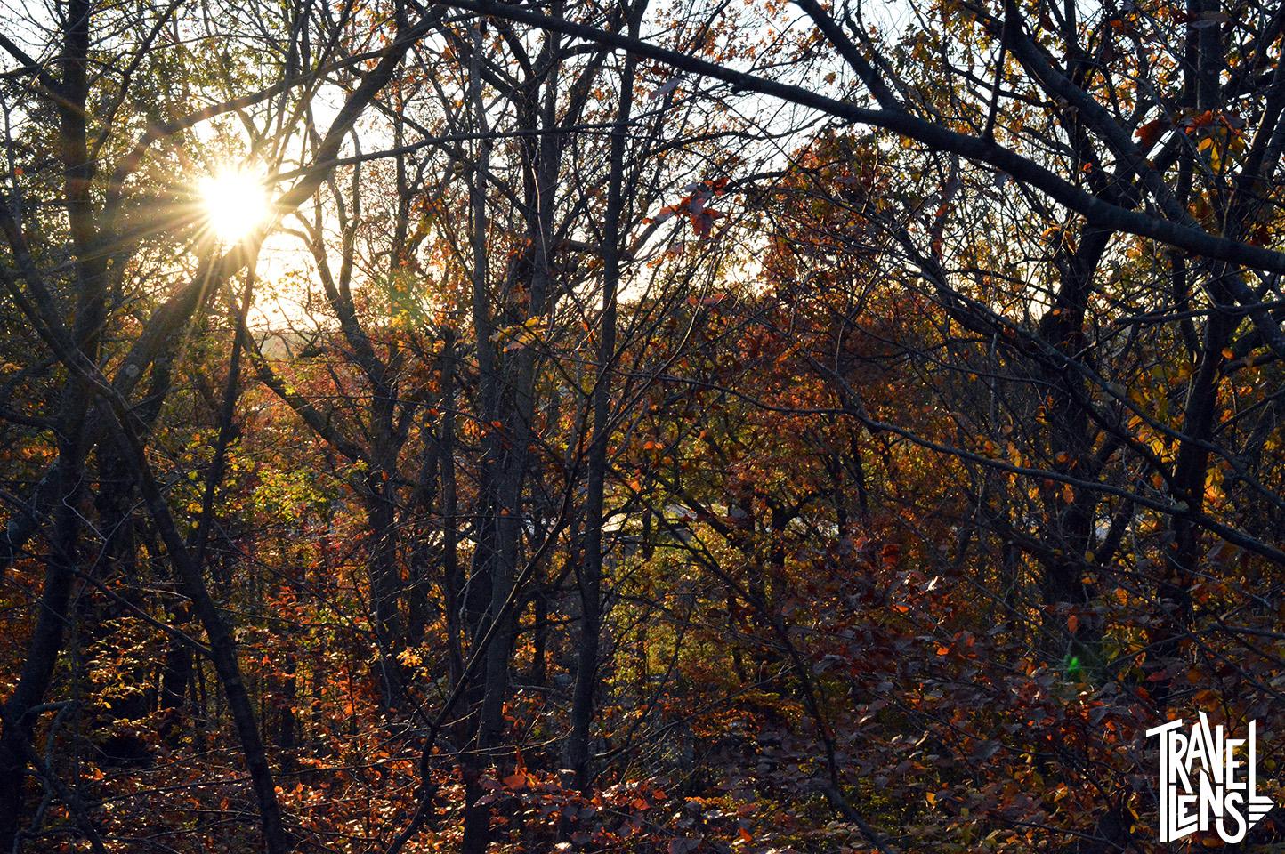 Sunset in Franklin Park Woods