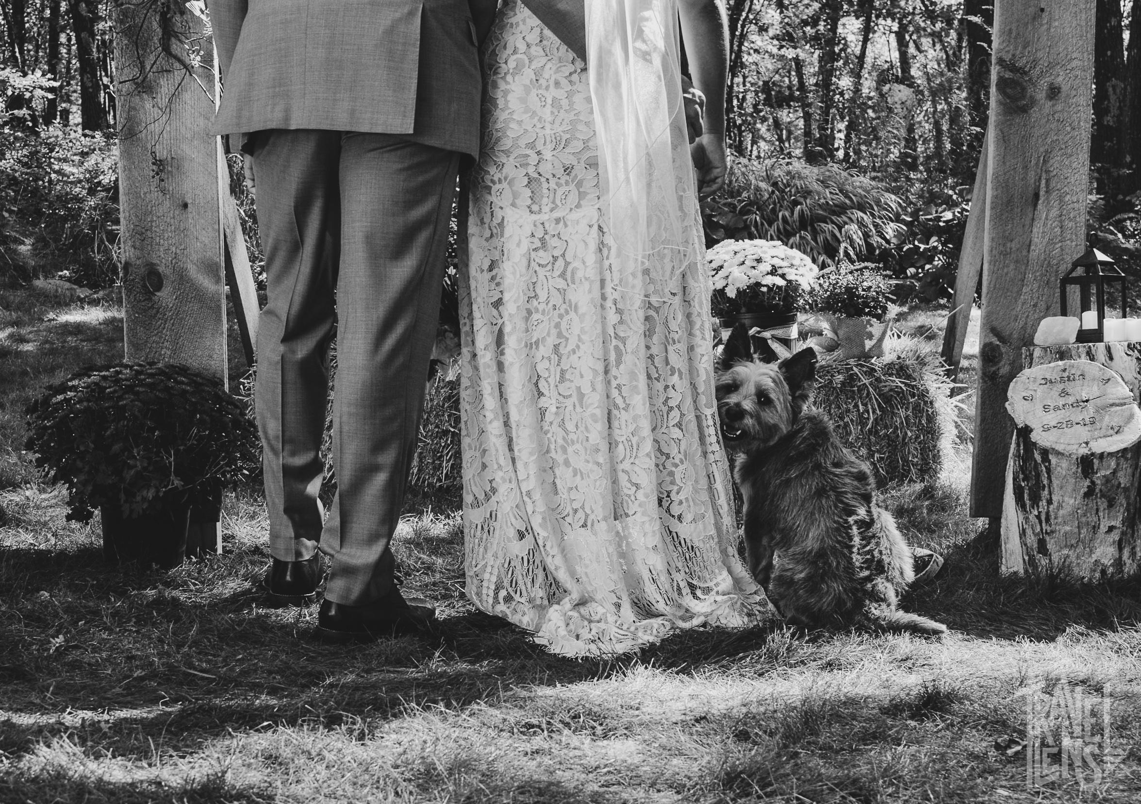 Photos after the wedding