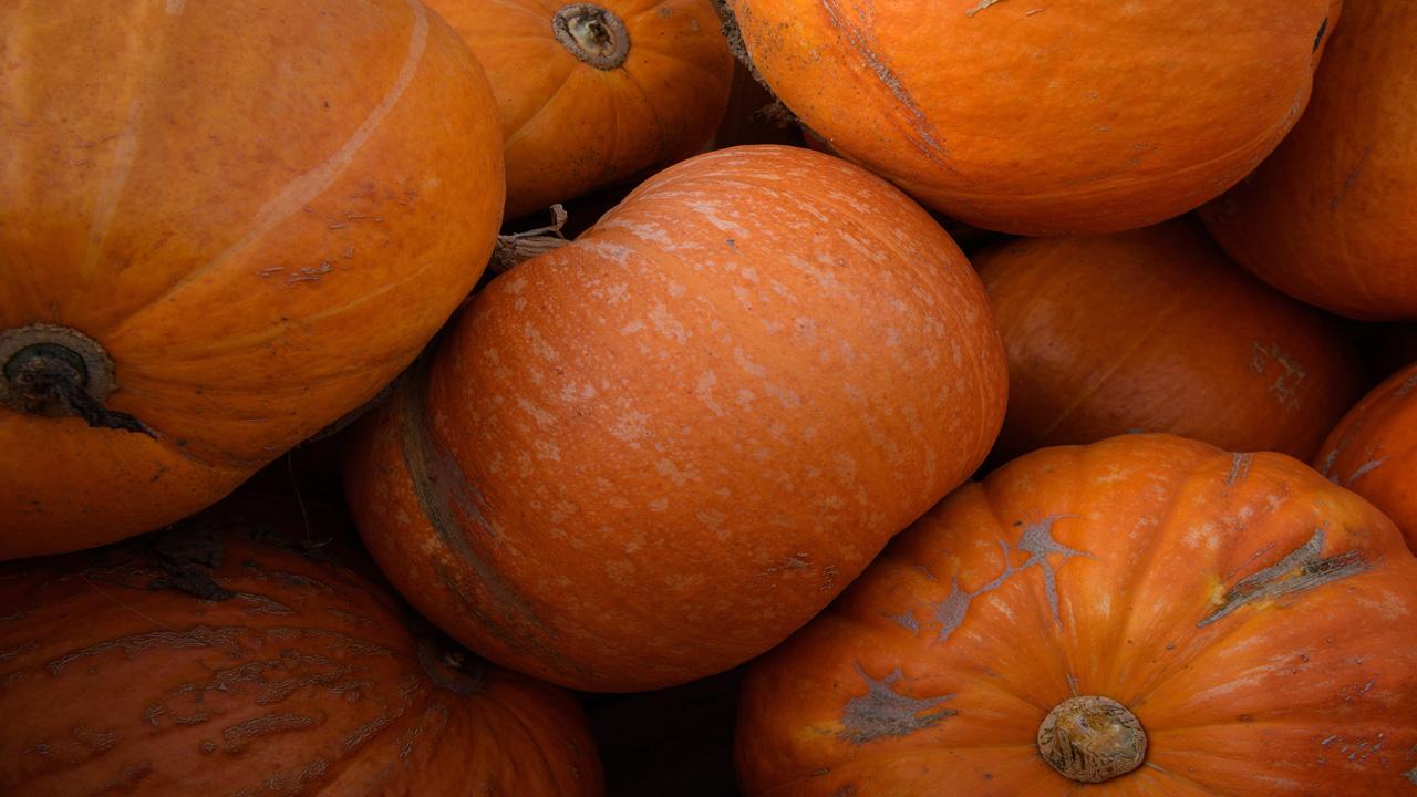 pumpkins06918476-159532