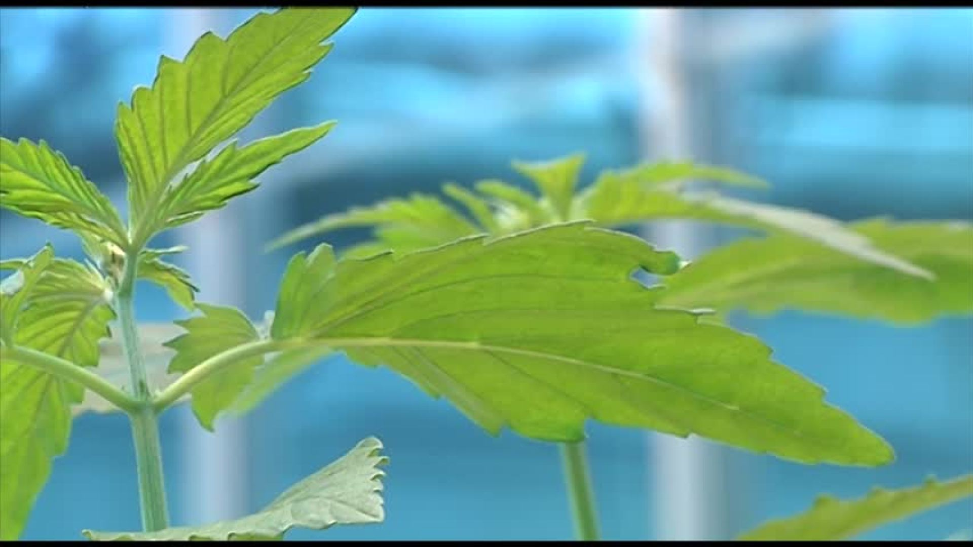 Work begins on nation's only hemp seed bank in Finger Lakes