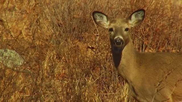 deer season_1554890080348.jpg.jpg