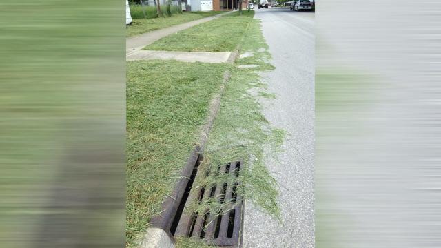 GRASS_1558107171134.jpg