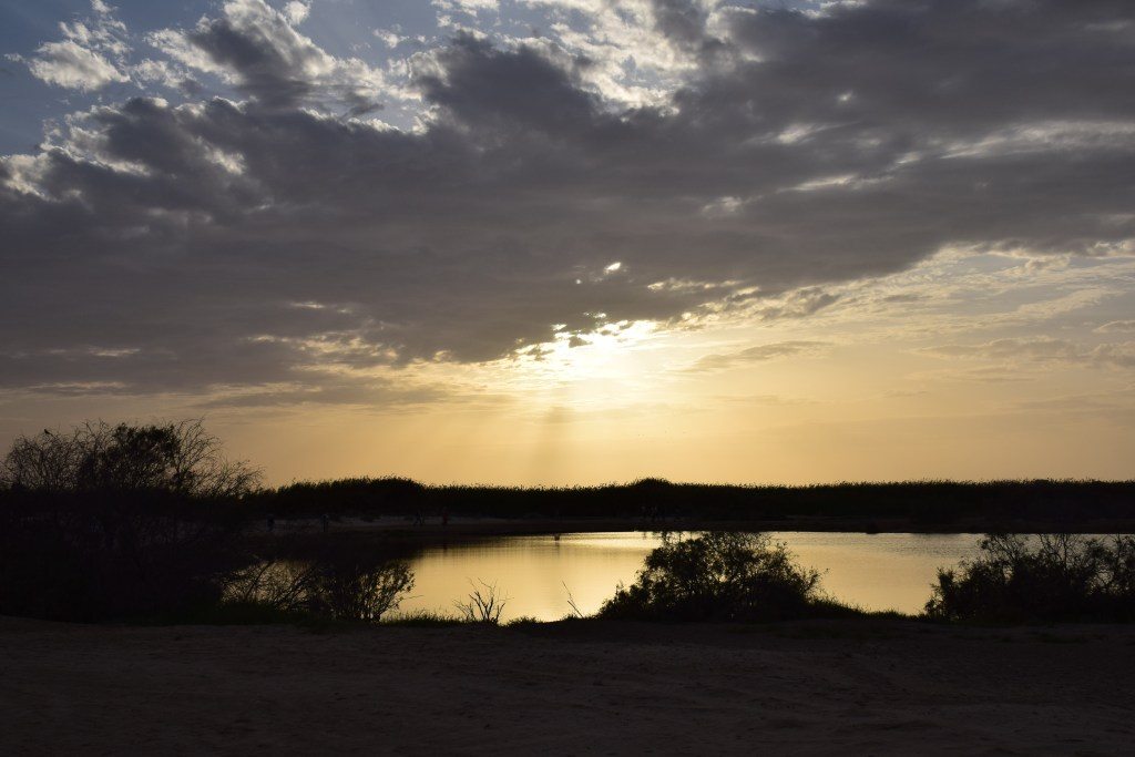 going home, sunset, UAE, Abu Dhabi, wetland, reserve, lake, wildlife