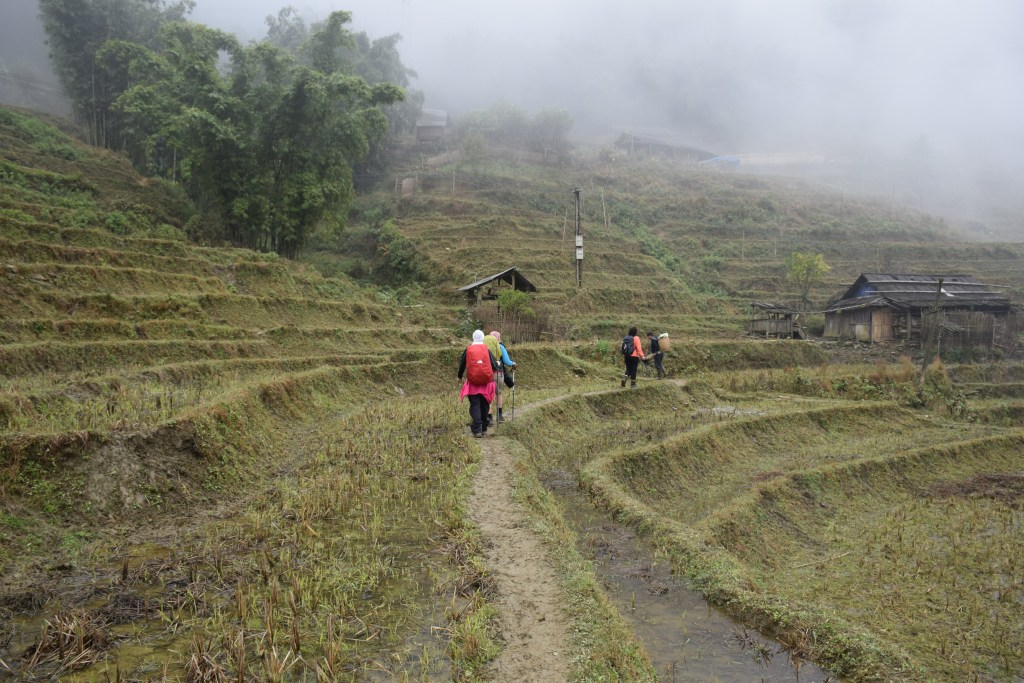 Sapa, north, Vietnam, rice fields