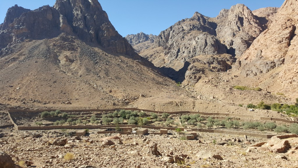 An Amateur's Botanical Notebook from the Sinai Trail