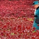 Match Bleuet contre Poppy : les Anglais sont 50 fois plus patriotes que nous.