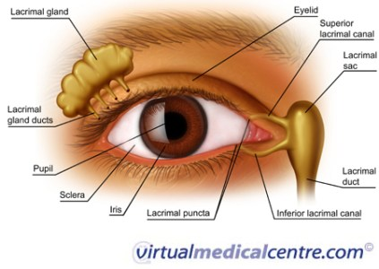 Parts of an eye full hd pictures wallpaper full hd pictures diagram of eye socket residential electrical symbols human eye anatomy and how vision works information myvmc ccuart Image collections
