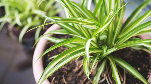 You Asked: Can Indoor Plants Really Purify the Air? – My ...