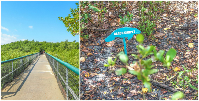 Tampa's Manatee Viewing Center | Apollo Beach, Tampa, Florida | Tampa Electric Company | TECO | Florida Manatees | Florida wildlife | Free things to do in Tampa | What to do in Tampa | Fun things to do in Tampa | nature trail