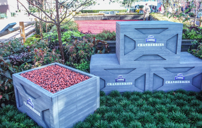 Foodie and the Feast // 20 Countries in 1 Day at the Epcot Food & Wine Festival   EPCOT Food & Wine Festival Ocean Spray cranberry bog