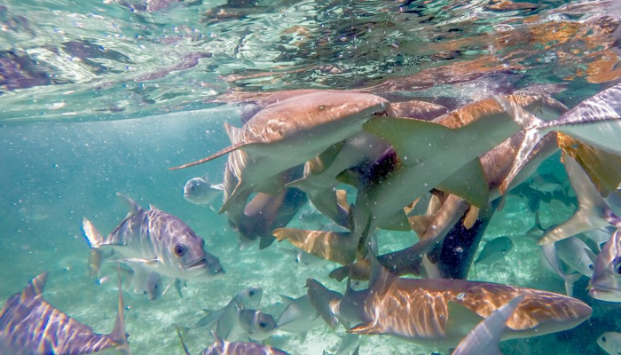 Snorkeling | Belize | Snorkeling in Belize with Caye Caulker's Caveman Snorkeling Tours