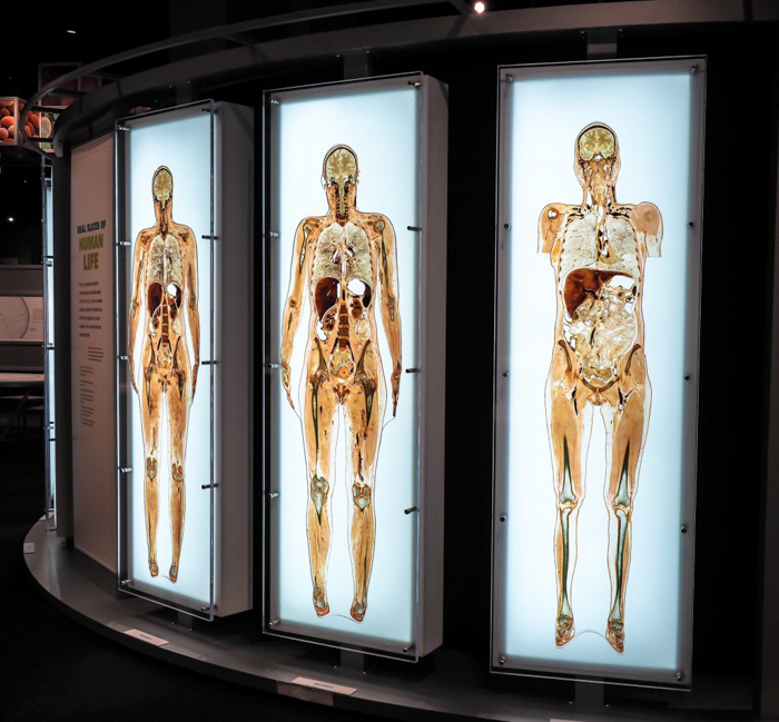 Checking out the Being Human hall at the Perot Museum of Nature and Science in Dallas, Texas with the Dallas CityPASS