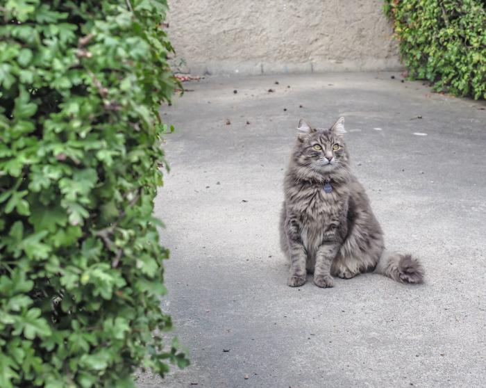 24 hours in Oslo, Norway -- Cat at The Norwegian Folk Museum
