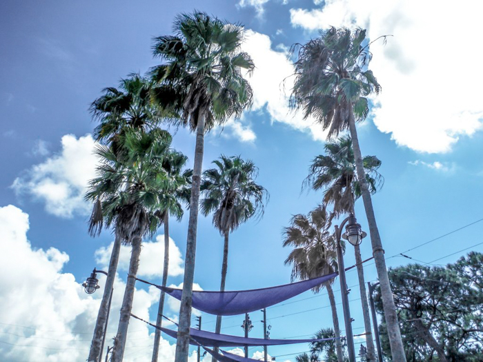 Greeking out at the Tarpon Springs Sponge Docks | What to do in the Tampa Bay area | Greek community | Greek food | Sponge capital of the world | palm trees