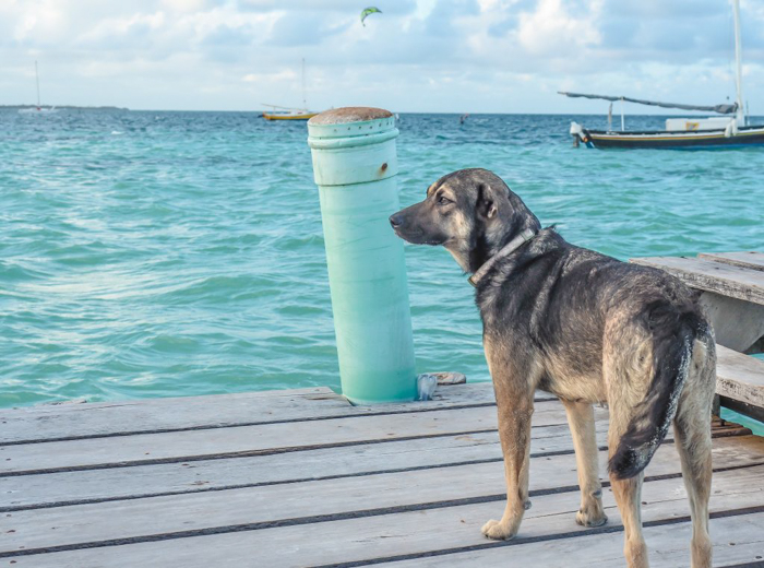 3 days in caye caulker, belize // stray dog