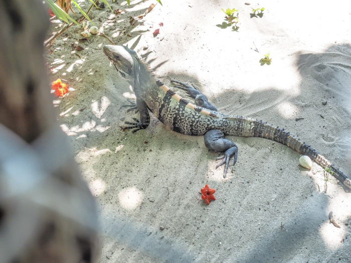 3 days in caye caulker, belize // iguana, colinda cabanas