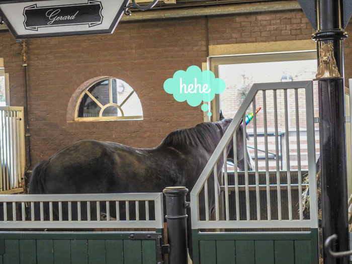 Horse stables | The Heineken Experience in Amsterdam | the Netherlands | Heineken Brewery | brewery tour | VIP tasting | beer | Amstel | Brand | Affligem | Heineken 41 | beer tasting