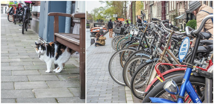 Strolling the canals of the Jordaan during 3 days in Amsterdam, Netherlands | Dutch culture and history | cats in windows | bike life