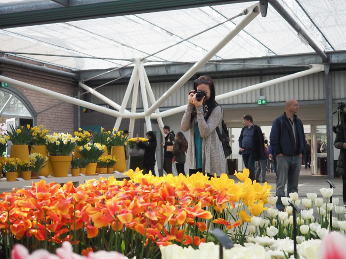 3 days in Amsterdam | Day trip to Keukenhof flower gardens | Netherlands | Dutch heritage and tulips!