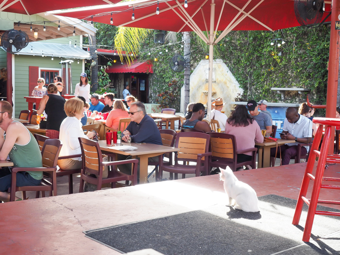 Spend a day in Ybor City | Tampa, Florida | Center stage cat