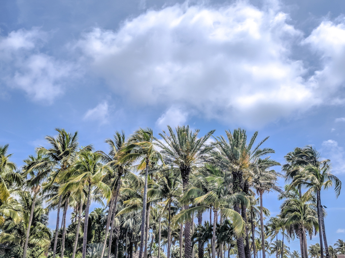 Exploring the 700 islands of The Bahamas - including Paradise Island and Nassau, the islands for swimming with the pigs, and more. Covering where to go in The Bahamas and which islands of The Bahamas you can visit. #bahamas #caribbean #islands #traveltips #palmtrees