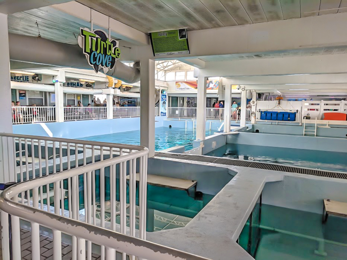 Clearwater Marine Aquarium // How to use the Tampa Bay CityPASS as a childless adult. Includes admission to Busch Gardens, Zoo Tampa at Lowry Park, Chihuly Museum, Clearwater Marine Aquarium, and the Florida Aquarium #tampabay #florida #citypass #traveltips #vacation #rollercoaster #tampa #timebudgettravel #beer