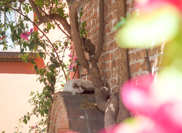 2 days in San Miguel de Allende travel tips | cat on a doorway #sanmigueldeallende #mexico #traveltips #timebudgettravel #sanmiguel #cat