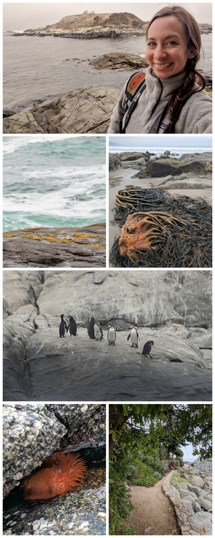 How to Spend One Week in Chile and Cover All the Bases   Spending the day with penguins on the Isla de Cachagua #chile #valparaiso #whattodoinchile #weekinchile #penguins #cachagua #beach
