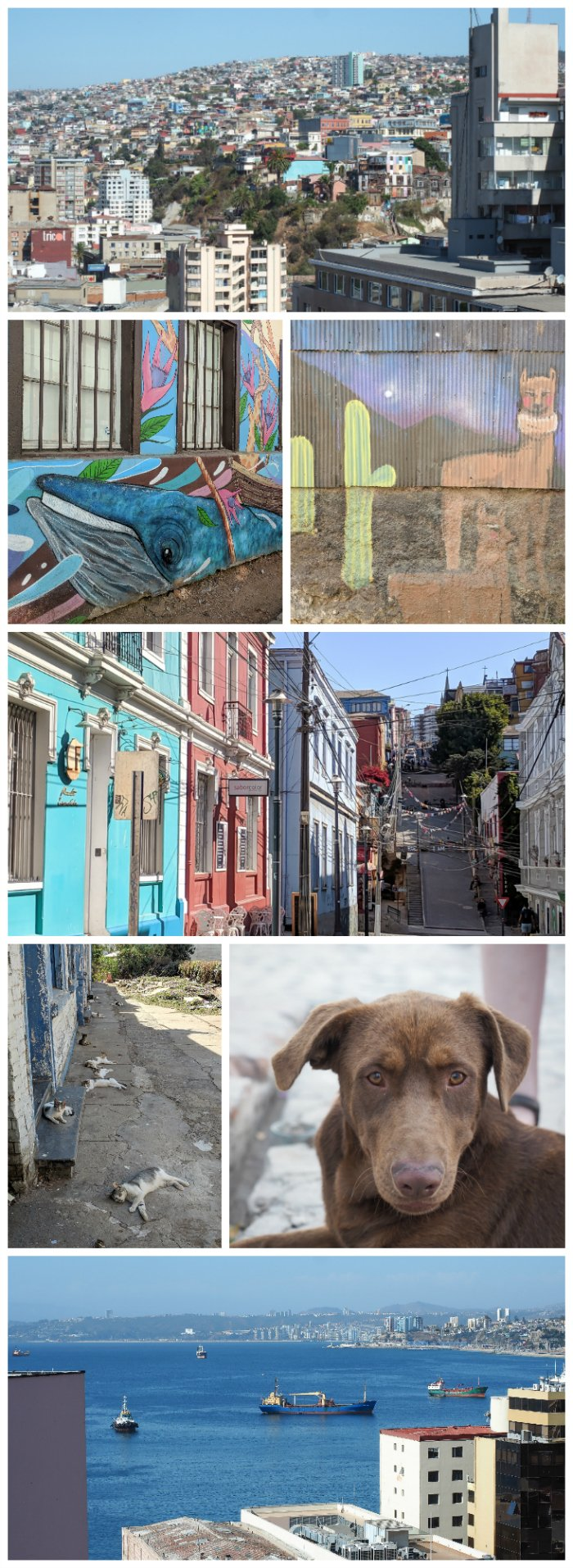 How to Spend One Week in Chile and Cover All the Bases   Wandering through the port city of Valparaiso and checking out the street art #chile #valpo #aerialviews #valparaiso #whattodoinchile #weekinchile #streetart