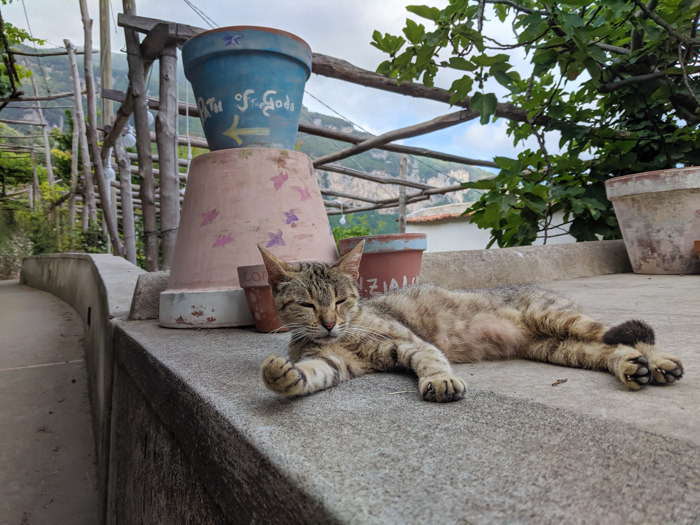 Petting a cat along the Amalfi Coast | Hiking the Path of the Gods from Sorrento, Italy on the Amalfi Coast | #pathofthegods #sorrento #amalficoast #hiking #italy