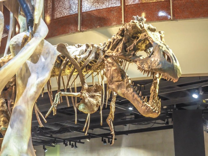7 Worthwhile Ways to Spend a Weekend in Dallas, Texas | Perot Museum of Nature and Science, dinosaurs