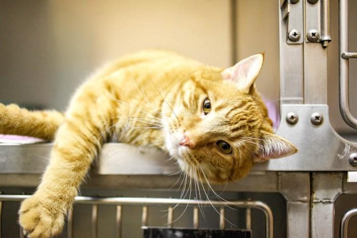 orange cat in a metal cage