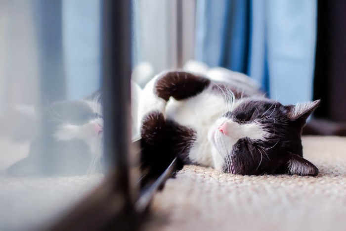 black and white cat laying on the floor next to a glass door