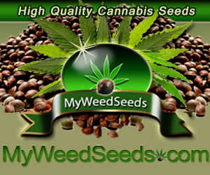Quality Cannabis Seeds MyWeedSeeds.com