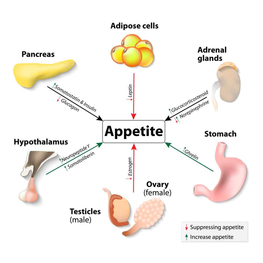 Appetite Suppressants That Work An Easy And Quick Overview