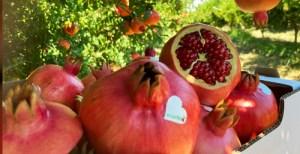Melagrane Dolci Italiane 18+2 kg in omaggio - Vendita Melograno fresco prodotto in Italia