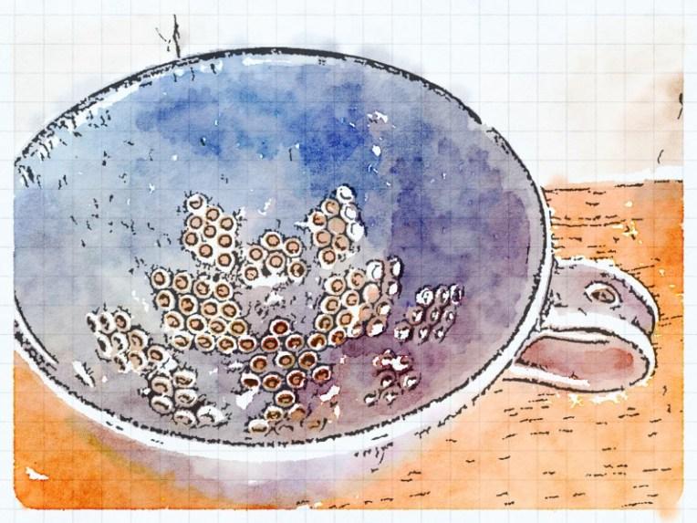 Blueberry Colander