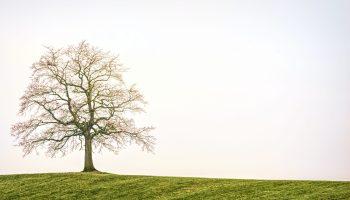 tree scaled