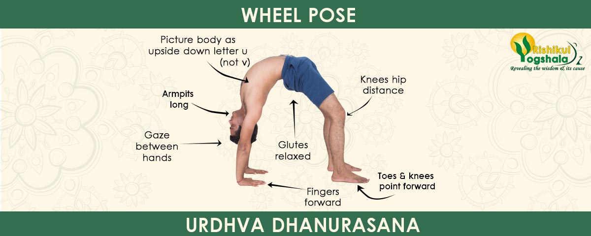 Upward Facing Bow Pose (Urdhva Dhanurasana)