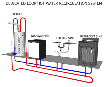 Dedicated loop hot water recirculation system