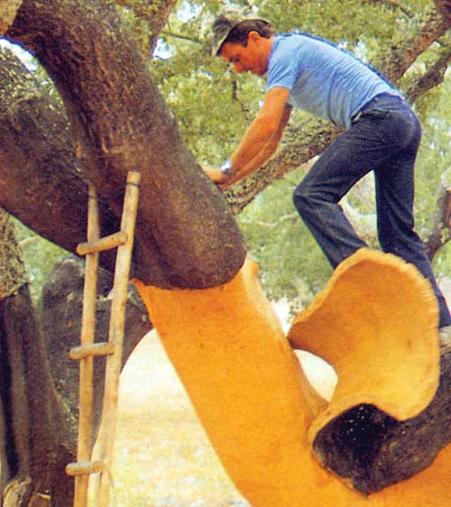 A worker strips the bark from a Quercus suber oak tree that will be used as cork flooring and other building products.