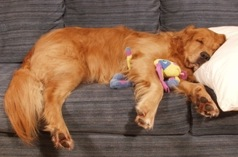 Keep your pets off the couch if you are allergic to them!