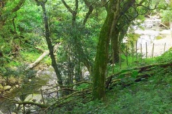 Tarifa Hidrica, Ofina Ambiental de Servicios Publicos de Heredia. ESPH.S.A. Procuencas, Protegiendo el agua para consumo humano. Aguas superficiales del Rio Tibasito, en San Rafael de Heredia.