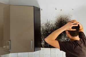 Mold Damage 101 for Laurel Homeowners