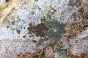 How to Get Rid of Green Mold in Towson