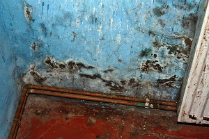 Mold Remediation in Anne Arundel County