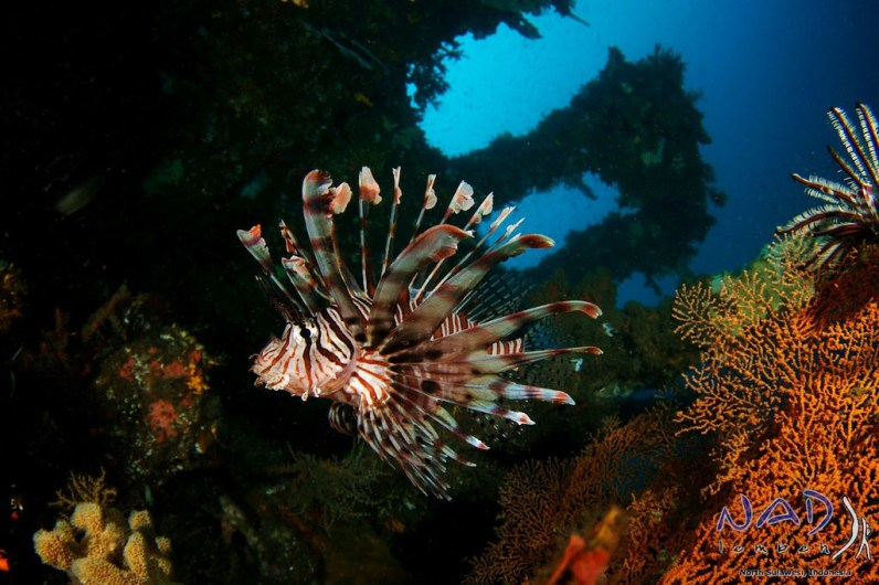 Lionfish on the Deck