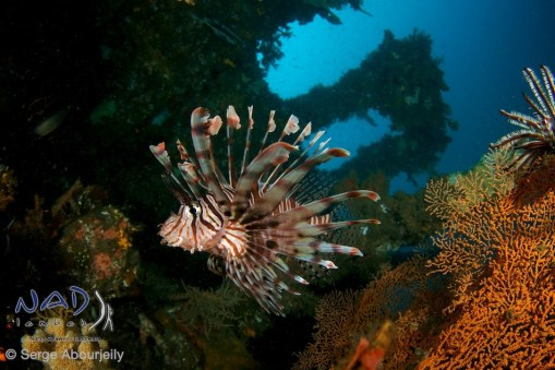 Lembeh Strait Wide Angle